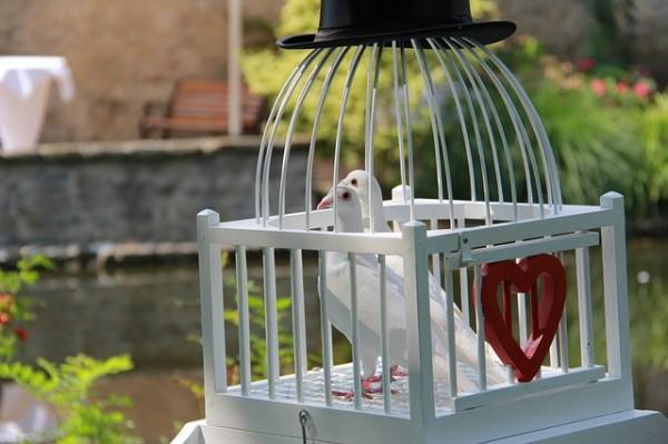 pigeons-2639686_640